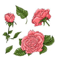 set coral roses hand drawing vector image