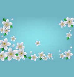 spring or summer banner with white flowers and vector image