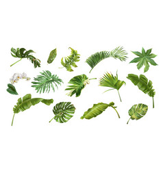 tropical realistic style plants and flowers set vector image