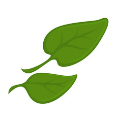 Two green small leaves vector