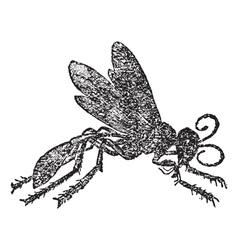 Vintage Sphex Sketch vector image vector image