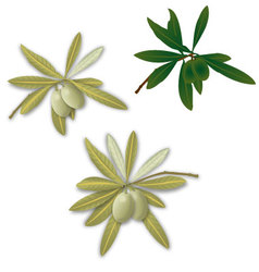 Realistic olive branches vector