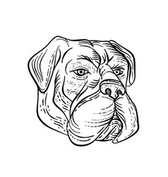 Bullmastiff head black and white etching vector