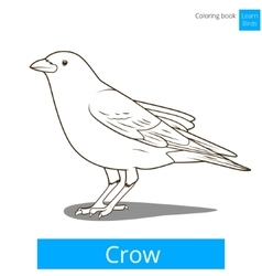 Crow learn birds coloring book vector