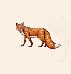 Fox looks away forest animal or ginger beast vector