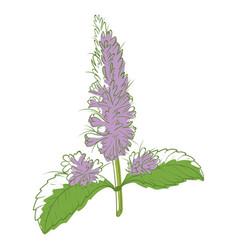 mint flower icon aromatic decorative beautiful vector image