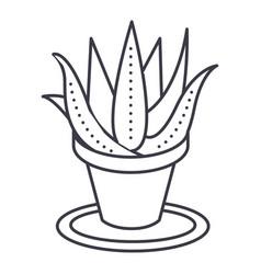 succulents aloe pot line icon sign vector image
