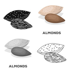 almondsdifferent kinds of nuts single icon in vector image