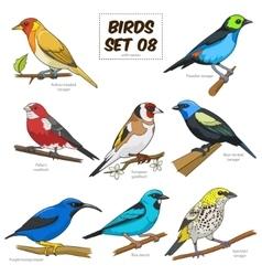 Bird set cartoon colorful vector