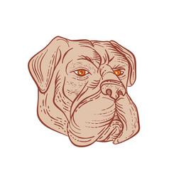 Bullmastiff head etching color vector