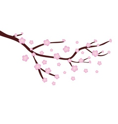 Cherry blossom vector