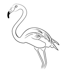 Flamingo bird black white sketch vector