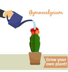hand watering gymnocalycium plant vector image