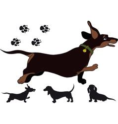 Run dachshund vector image vector image