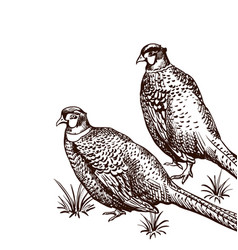 background with pheasants vector image