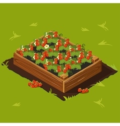 Berries Garden Wooden Box with Strawberry Set 14 vector