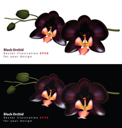 Black orchid background vector