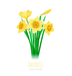 five daffodils with leaves on vector image