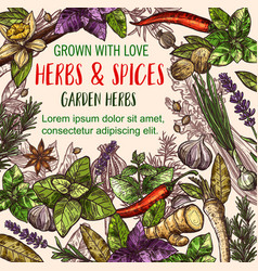 Herb and spice sketch poster of herbal food design vector