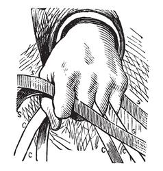 Vintage Horse Reins Sketch vector image