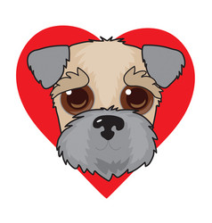 wheaten terrier face vector image
