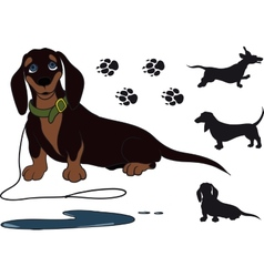 sitting dachshund vector image