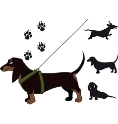 dachshund vector image