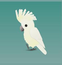 White umbrella cockatoo vector