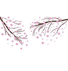 Cherry blossom2 vector image vector image