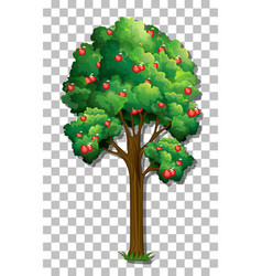 Apple tree on transparent background vector