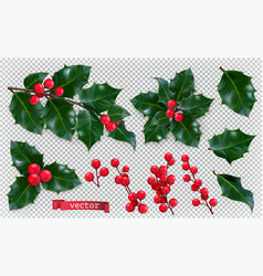 christmas decorations holly red berries 3d vector image