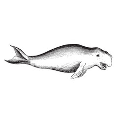 Dugong vintage vector