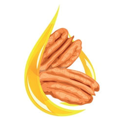 pecan oil stylized vector image