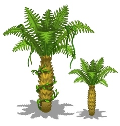 Pineapple palm tree on a white background vector image