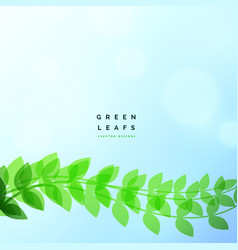 beautiful green leaf eco nature background vector image