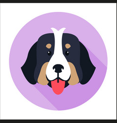 canine face of bernese mountain dog flat design vector image