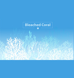 Coral bleaching vector