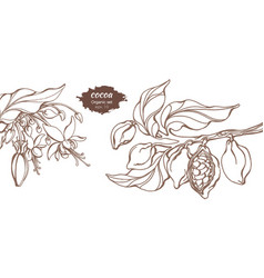 template cocoa branch vector image