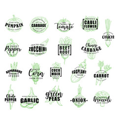 Vegetable hand drawn lettering with veggies sketch vector