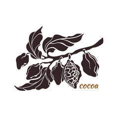 cocoa branch shape 1 vector image