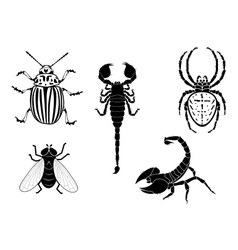 potato beetle fly scorpion and spider vector image