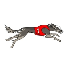 Running dog saluki breed in dog racing dress vector