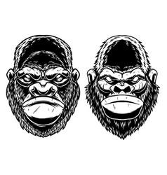 set head gorilla ape in vintage vector image