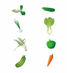 Set of fresh green vegetables isolated vector