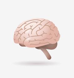brain icon human internal organ biology anatomy vector image