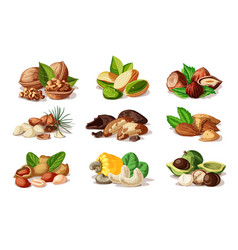 Cartoon colorful nuts set vector