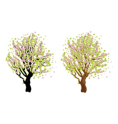 Cherry with blossom2 vector image vector image