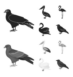 Kite pelican flamingo swan birds set vector