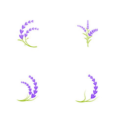Lavender flower icon vector