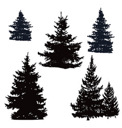Pine trees and spruce vector